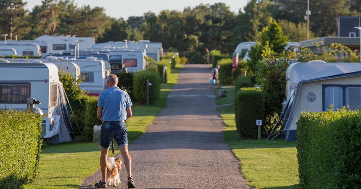 DCU køber rågeleje og flyvesandet campingpladser